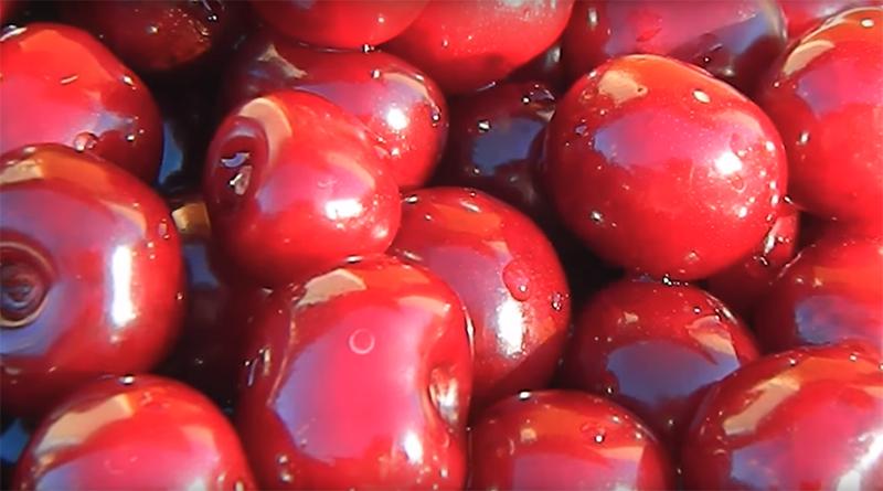 Какой сорт вишни выбрать для посадки