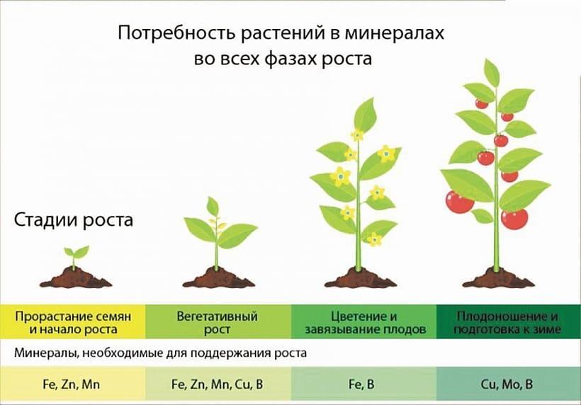 Значение макро и микроэлементов в жизни растений