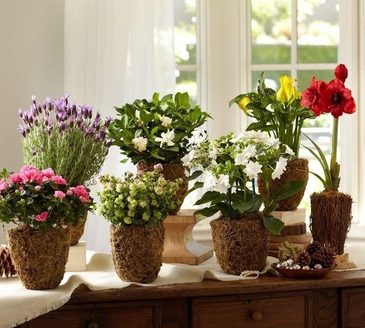 Как правильно расположить комнатные растения