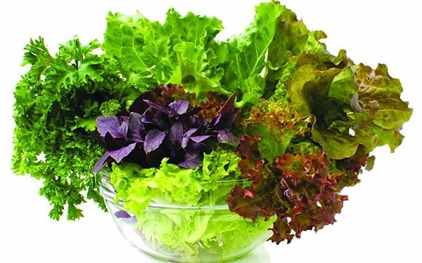 богатый урожай салата