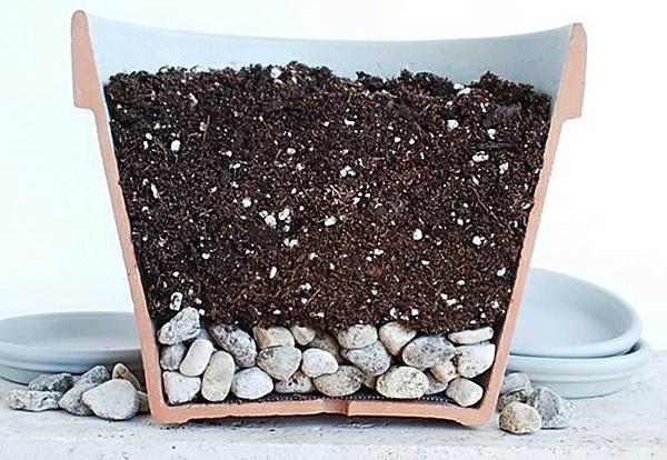 горшок для выращивания салата