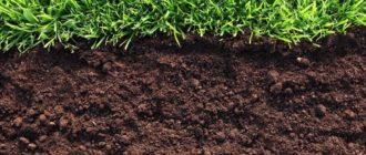 Почва для огорода фото