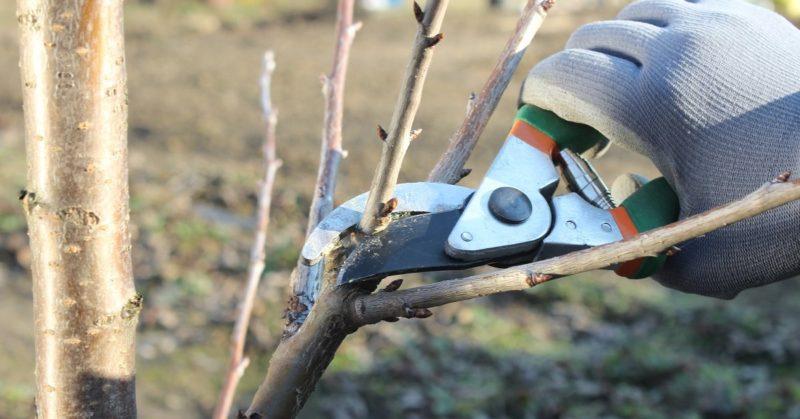 Какие инструменты нужны для обрезки деревьев